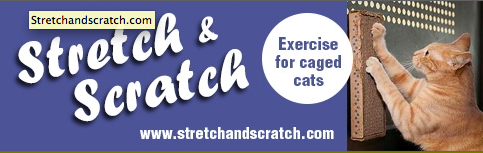 stretchnscratch